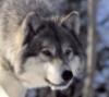 Эстакада через ж/д в Щербинке - последнее сообщение от Лесной Волк